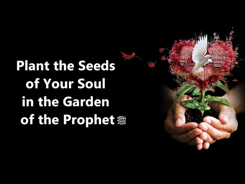 Plant the Seed of your Soul in the Garden of the Prophet s E31★ Divine Love  Hub E Rasul  ★