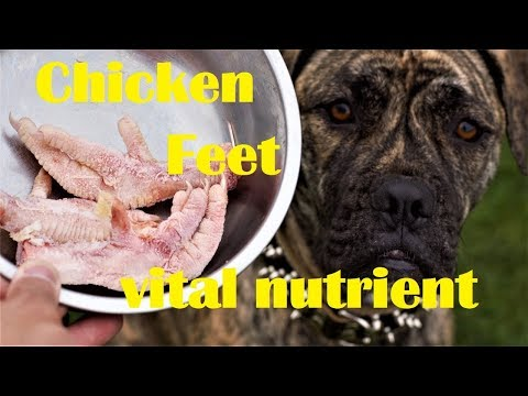 Feed Chicken Feet for Vital Nutrient for Joint and Teeth