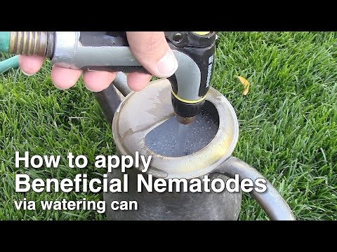 Natural organic pest control - Applying Beneficial Nematodes via Watering Can