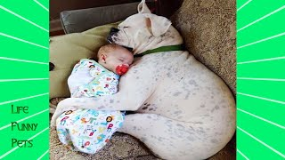 Cute Dogs and Babies are Best Friends - | LIFE FUNNY PETS 🐯🐶
