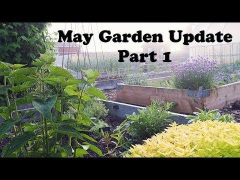 May Backyard Garden Update - Part 1