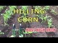 HILLING CORN ~ HOSS High Arch Wheel Hoe