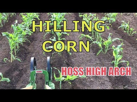 HILLING CORN ~ HOSS High Arch Wheel Hoe