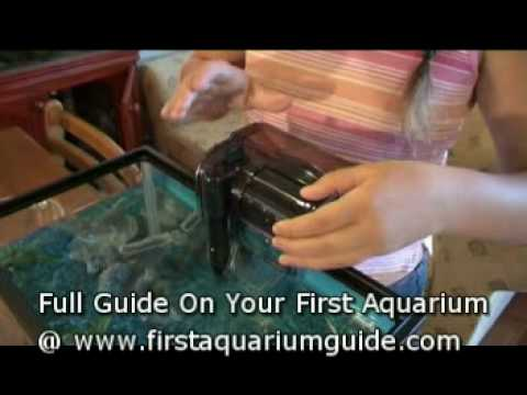 Filters For Your Aquarium (Beginners How To Guide)