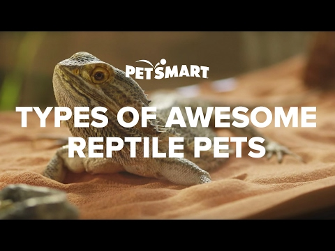 PetSmart's Types of Awesome Reptile Pets
