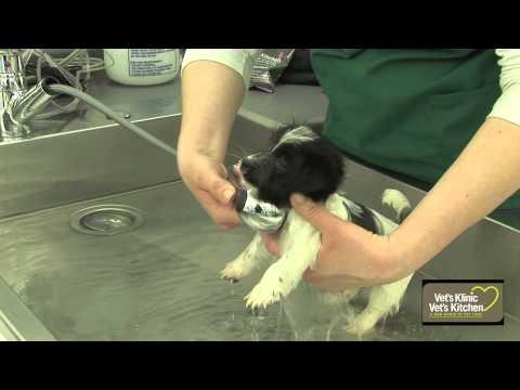 First puppy bath