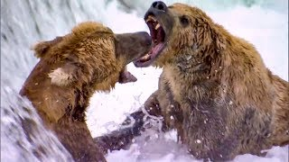 Top 5 Most Dangerous River Moments | BBC Earth