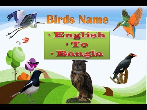 Birds Name with English To Bangla: Learn Birds Names for Children  :  Birds Name and Sounds for Kids