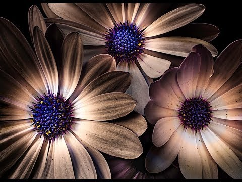 CREATIVE FLOWER PHOTOGRAPHY - Flowers Emerging From The Dark