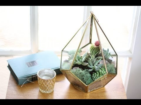 [ WikiDIY ] How  to  Make  a  Terrarium  with  Succulent  Plants