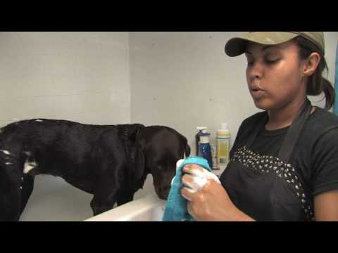 Dog Care : Flea Treatments for Dogs