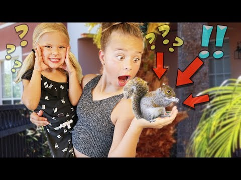 WE GET A BABY SQUIRREL | NEW PET!!
