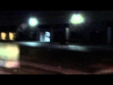 Deer running in West Valley