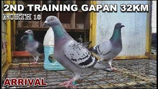 Bholu Veer Racer Pigeon 237 (ASHOK @ SOKI BHAI PANIPAT KE