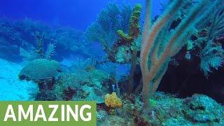 Diver finds hidden treasures on Grand Cayman Island