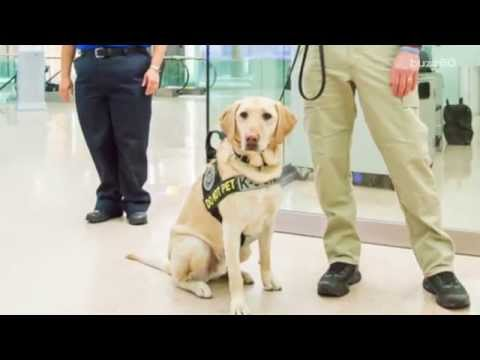 TSA asking people to adopt dogs who flunked training