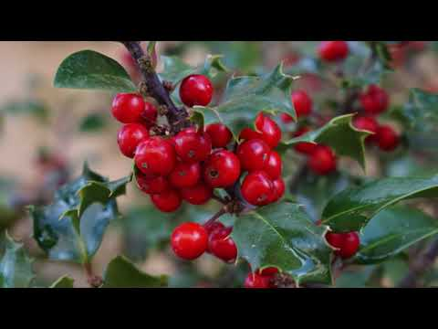 A Focus On Holly: All You Need To Know
