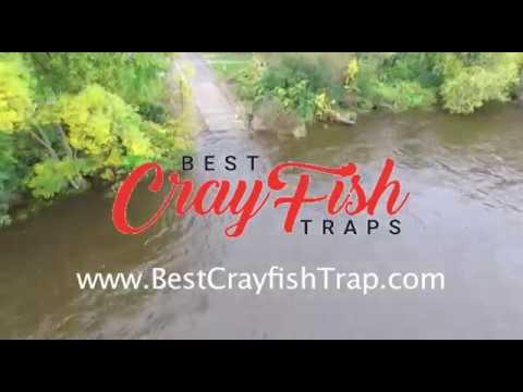 Best Crayfish Trap