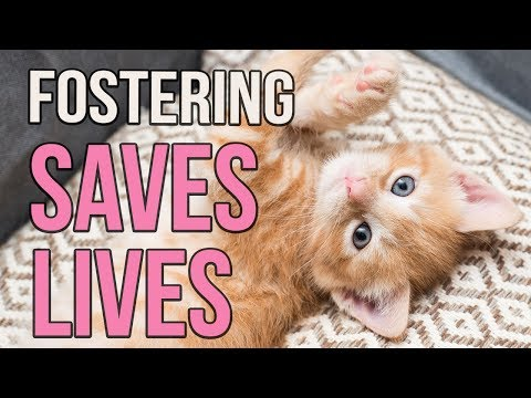 Fostering Saves Lives!