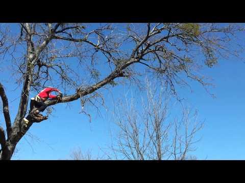 Cutting a tree limb
