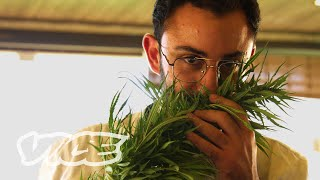 Lebanon's Green Gold: The Debate to Legalize Cannabis
