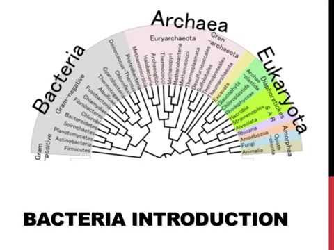 An introduction to bacteria
