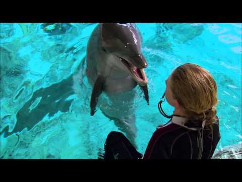 Super Smart Dolphin Answers Questions | Extraordinary Animals | Earth