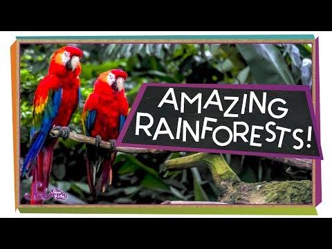 Explore the Rainforest!