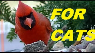 Videos For Cats to Watch , Beautiful Birds, Squirrels, Rabbits, Chipmunks, Pigeons,