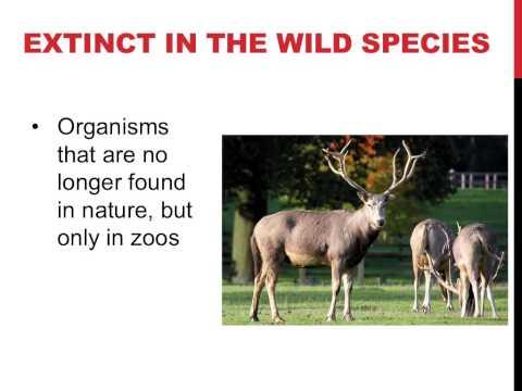 Conservation ecology