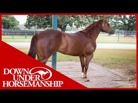 Clinton Anderson: What to do When a Horse Paws While Tied Up - Downunder Horsemanship