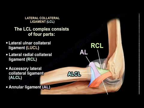 Ligaments of the Elbow Stability Of The Elbow - Everything You Need To Know - Dr. Nabil Ebraheim