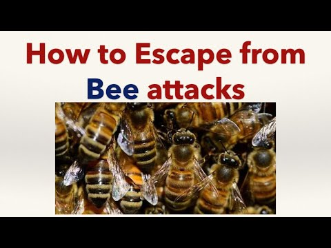 How to Escape from Bee Attacks
