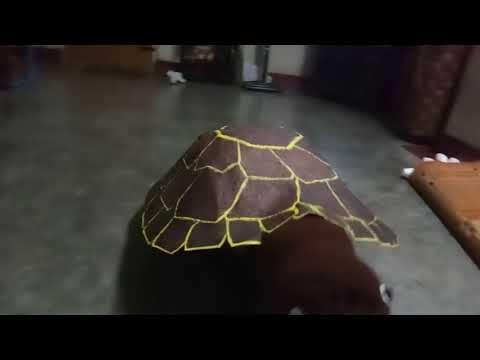 Tortoise fancy dress by Vipul Sagar, little star school.