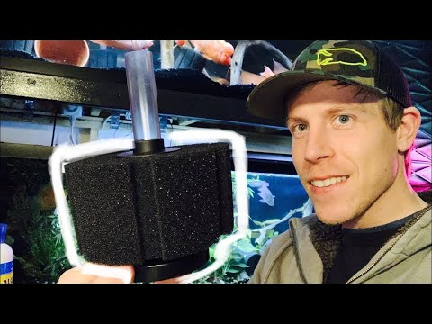 How to Setup Sponge Filters Guide