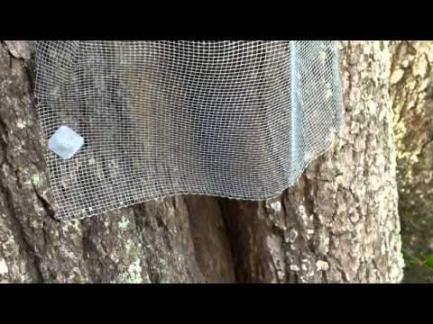 How To Trap Bees Out Of Trees