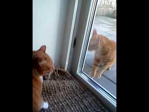 The True Drama of Indoor Cats