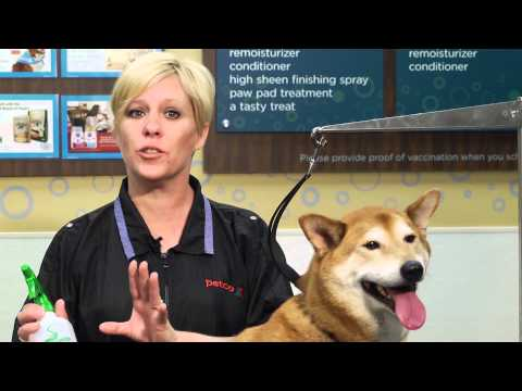 A Handy Recipe for De-Skunking Your Dog : Dog Grooming Tips