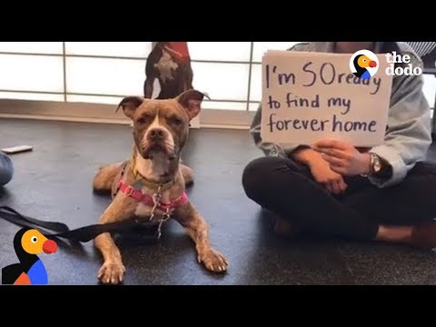 Jazz Loving Pit Bull Terrier Dog Up For Adoption: Find Your Fido | The Dodo LIVE