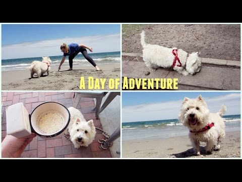 A Day of Adventure | TheDogBlog