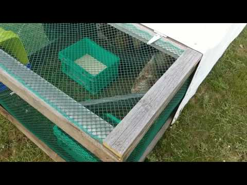 Chicken Coop For $50! 4x8 Chicken Tractor Holds 10 Hens! Built in 2 Hours!