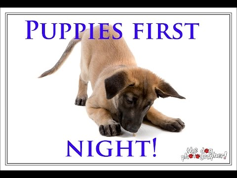 Puppies First night!