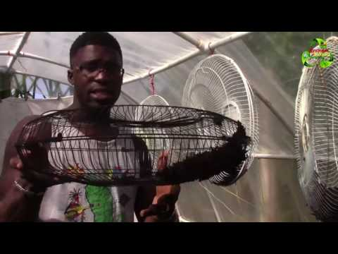 DIY Plant Dehydrator | How To Dehydrate Food Without Electricity || Agrosuede ✔