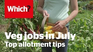 Vegetable gardening jobs for July - Which? Gardening