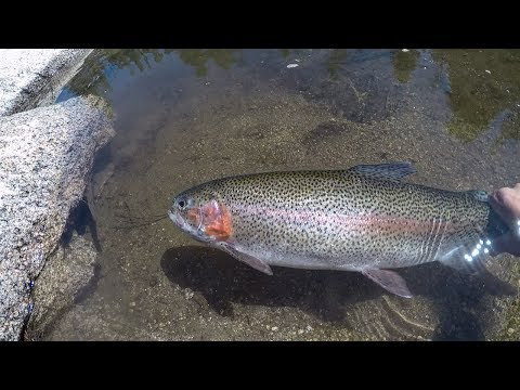 CATCH N' COOK: Rainbow Trout Edition