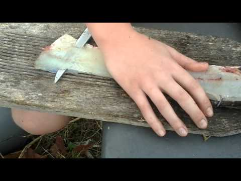 How to clean a largemouth bass