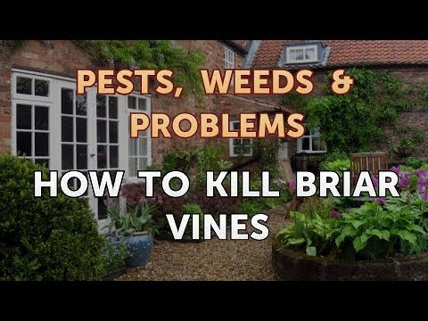 How to Kill Briar Vines