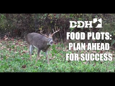 How to Plan the Most Successful Food Plots for Deer