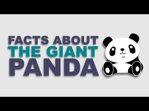 Giant Panda Facts: Endangered Species, Found Only in China, Cub Size