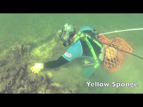 Tropical Sea Sponges